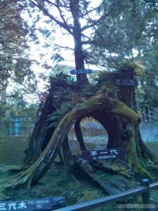 Alishan - three generation tree