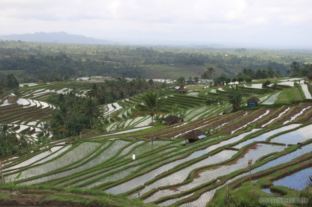 rice terraces of Bali - scenery 7