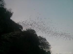 Battambang - bats 3