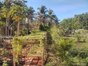 Bohol - Coco farm hostel farm