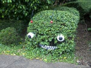 Brisbane - Roma park surprise bush