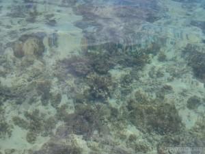 El Nido - kayaking clear water 2