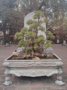 Hanoi - history museum garden 2