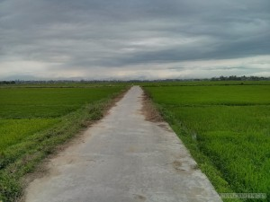 Hoi An - biking road through rice fields
