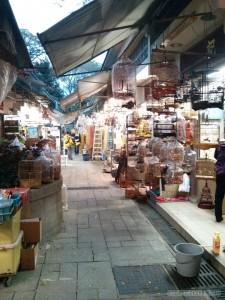 Hong Kong - bird market