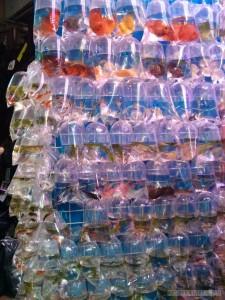 Hong Kong - fish market