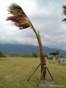Hualien - coastline trail blown tree