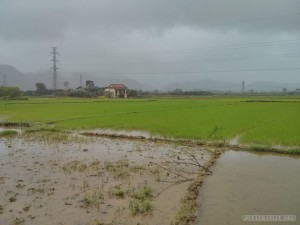 Hue - biking rice fields in rain