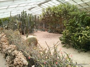 Kenting - forest recreation area desert plants