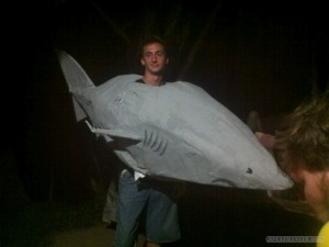 Koh Tao - stolen shark