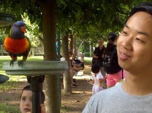 Lone Pine sanctuary - parrot