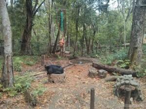 Luang Prabang - Kuang Si bear rescue 1