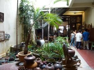 Malacca - indoor plants 1