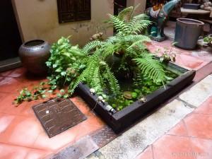 Malacca - indoor plants 2