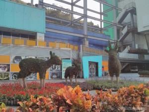 Taiwan Zoo - zoo animals
