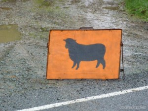 NZ Campervanning - sheep sign