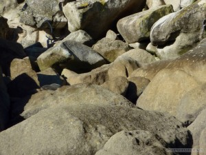 NZ South Island - Able Tasman seals 1