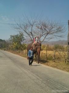 Pai - elephant riding 1