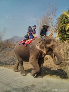 Pai - elephant riding 2