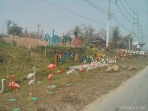 Pai - flamingos