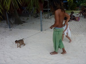 Perhentian Islands - walking a monkey