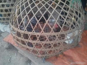 Phonsavan - local market chicken basket