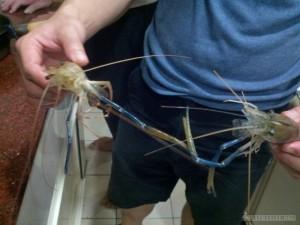 Shrimp fishing - two shrimp