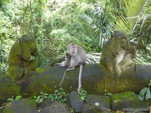 Ubud - monkey speak no evil