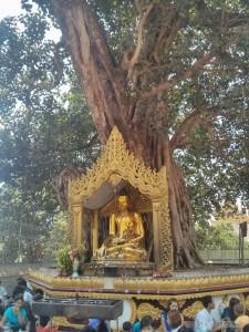 Yangon - Shwedagon pagoda bodhi tree 1